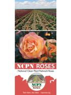 NCPN-Roses Brochure