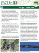 Crown Gall Factsheet February 2015