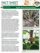 Crown Gall of Roses Factsheet (Spanish)