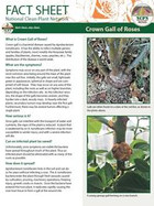 Crown Gall of Roses Factsheet