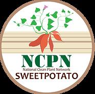 ncpnSweetPotato_logo.png