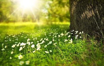 Sunny Meadow for Susan Ernst Retreat.jpg