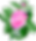 rose-158816_1280.png