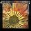 Thumbnail: Flower 2
