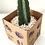 Thumbnail: Cacto mandacaru sem espinhos em vaso terracota