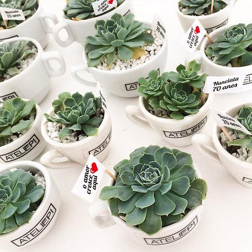 6 unid. Xícaras de porcelana com suculentas