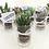 Thumbnail: 20 unid. Mini suculentas em Copinho de vidro + fita + bandeirinha