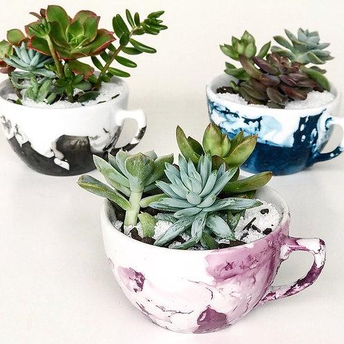 3 unid. Xícaras de porcelana Pintadas com Suculentas