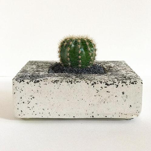 Vaso quadrado de cimento com pedriscos e cacto