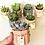 Thumbnail: 12 Vasinhos octógonos coloridos com suculentas