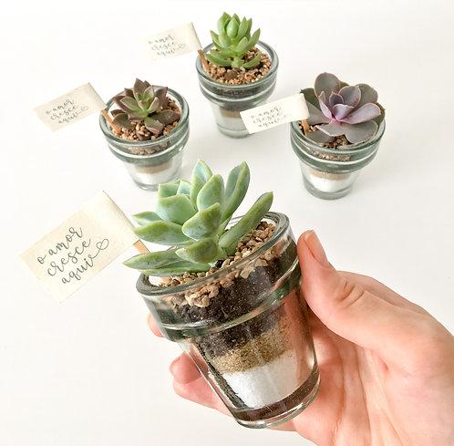 20 unid. Mini Suculentas em vaso de Vidro Artesanal