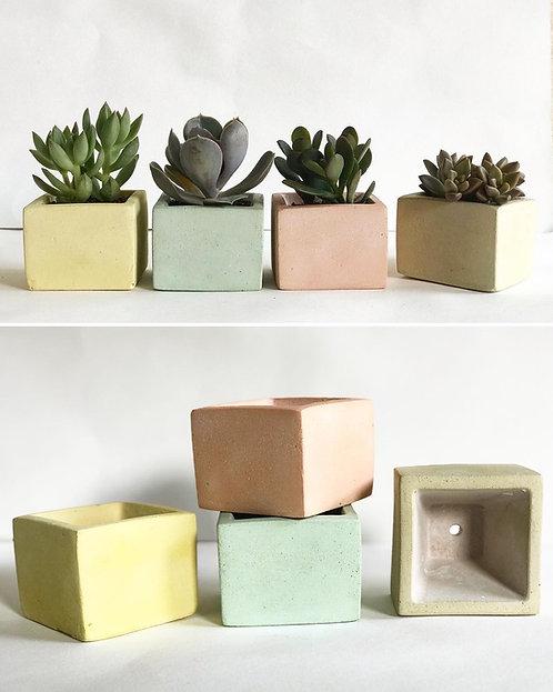 4 Vasinhos quadrados de cimento com suculentas