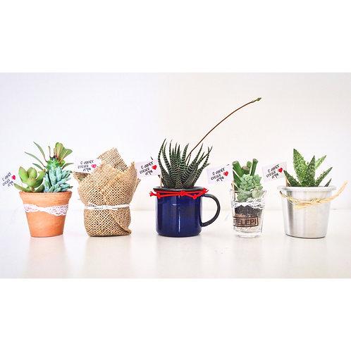 4 Mix com 5 Modelos de Vasinhos Variados com Arranjo de suculentas (20 unidades)