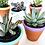 Thumbnail: 20 unid. Mix de cores - Vaso Terracota pintado com Suculenta