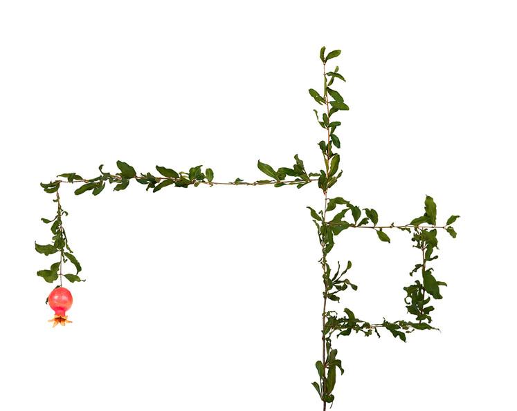 Pomergranates
