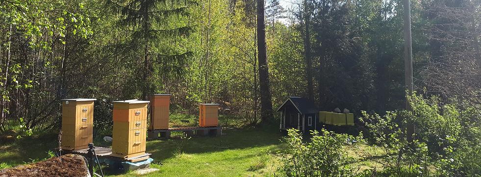 Bigård med träkupor på sommaren