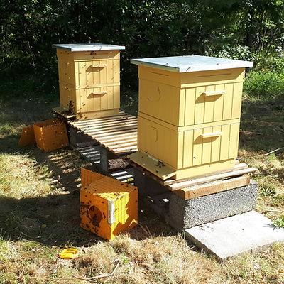 Paketbin framför bikupor efter installation.