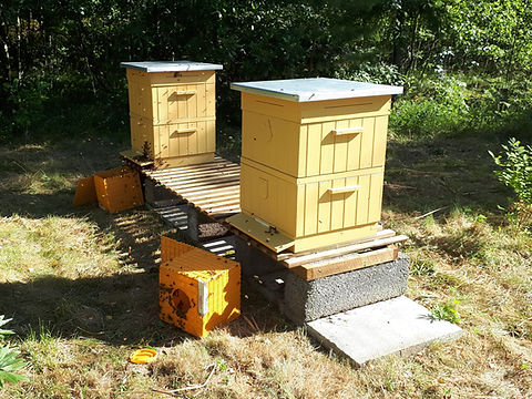 Paketbin framför bikupor, under inflyttning.