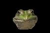 frog-5454930__480.webp
