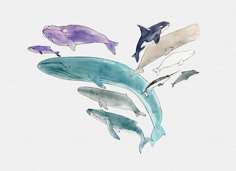 Tipos Ballenas MVJ.PNG