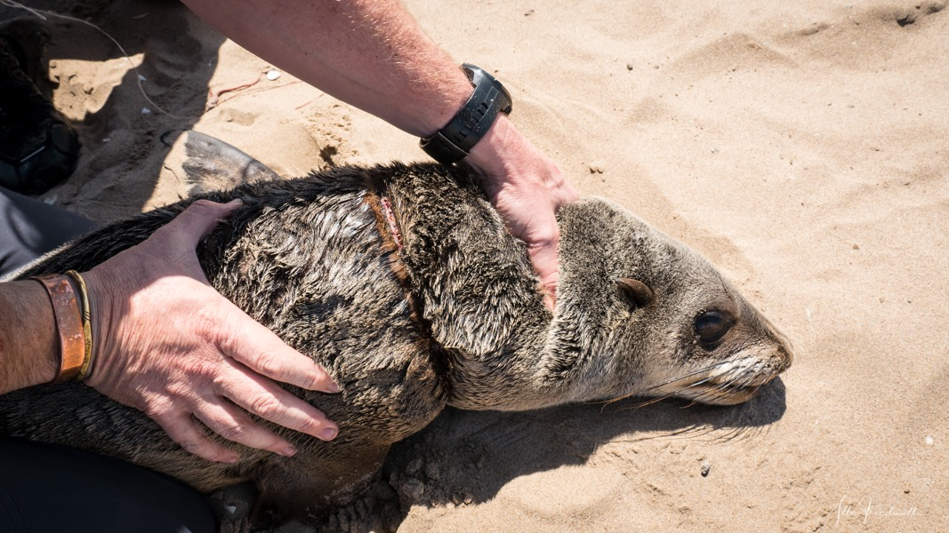 190909-AT-Seal Rescue WM-1490425.jpeg