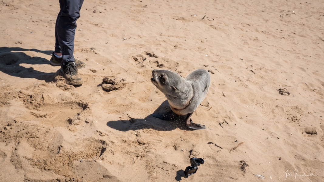 190909-AT-Seal Rescue WM-1490502.jpeg
