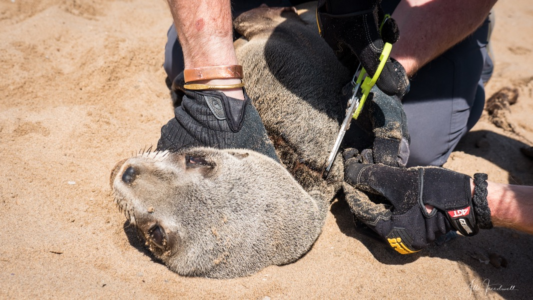 190909-AT-Seal Rescue WM-1490477.jpeg