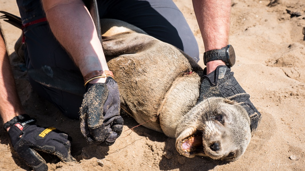 190909-AT-Seal Rescue WM-1490498.jpeg