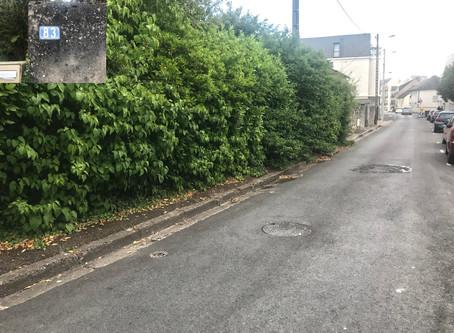 Végétation envahissante au 83 rue Croix Pasquier