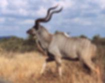 kudu pic.jpg