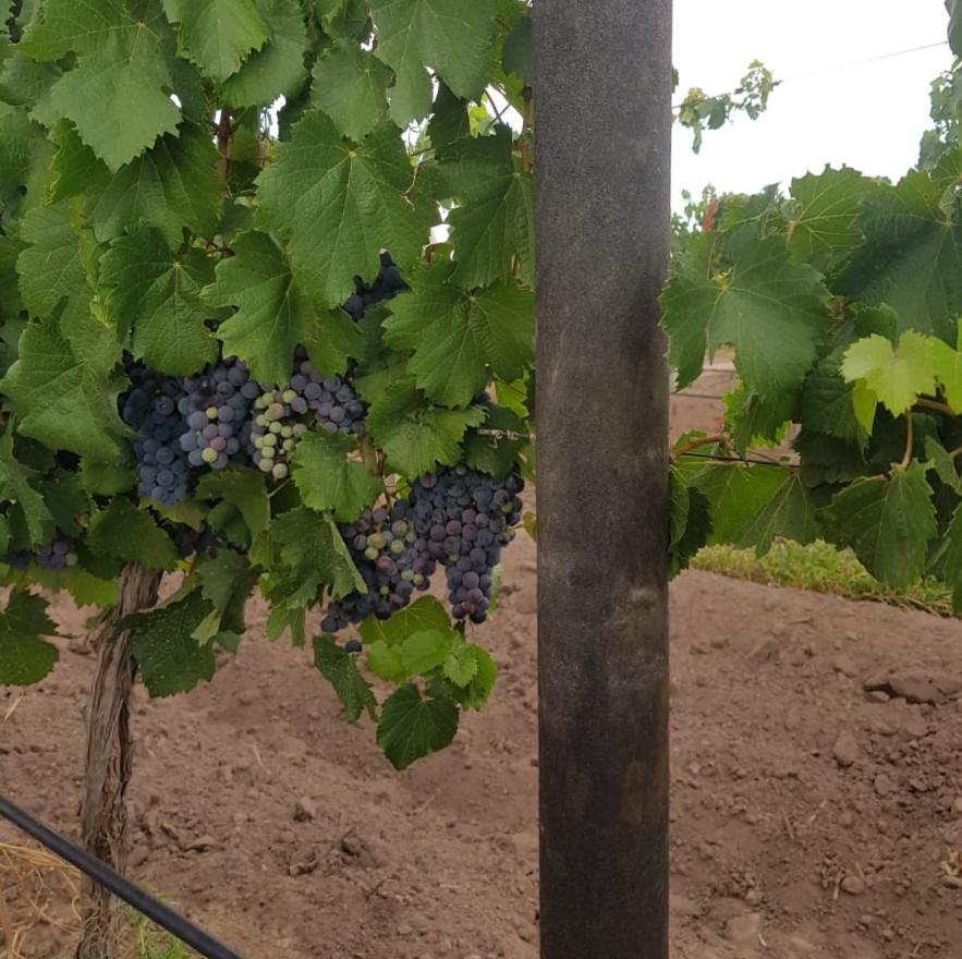postes para viñedos 100% plastico reciclado