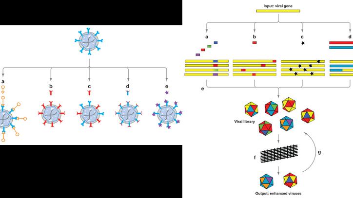 "2008. David V. Schaffer, James T. Koerber, and Kwang-il Lim. ""Molecular engineering of viral ge"