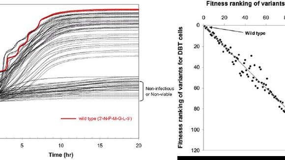 "2009. Kwang-il Lim and John Yin. ""Computational fitness landscape for all gene-order permutatio"