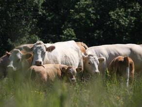 """Har du en """"bondespire"""" i deg? Gårdsarbeider AS søker gårdsarbeidere i alle aldre"""
