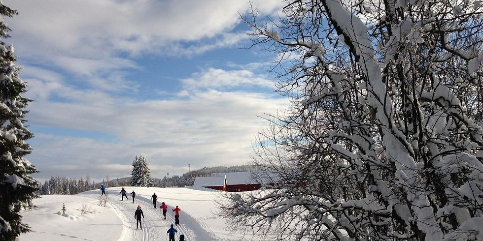 Go cross country skiing (not for beginners)