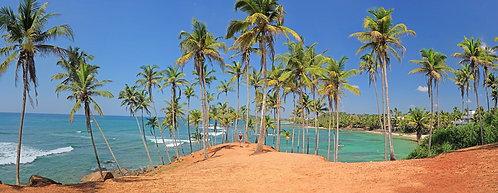 Шри Ланка. Пальмы пляжа Мирисса.