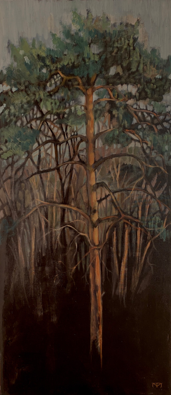 Tall mot mörk skog