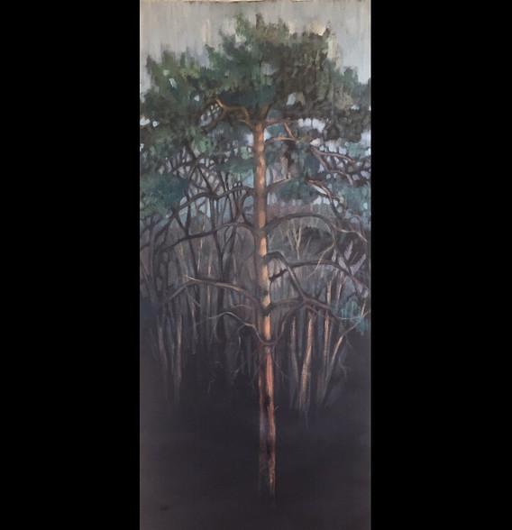Fir in Dark Woods