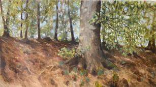 Gyllebo-skogen