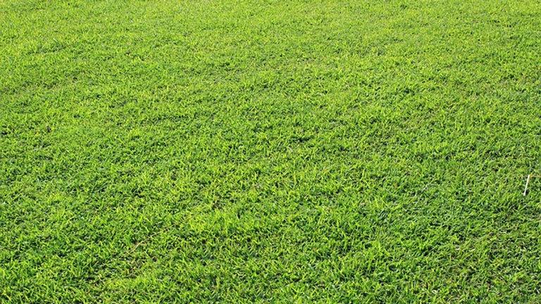 Sekání - anglický trávník