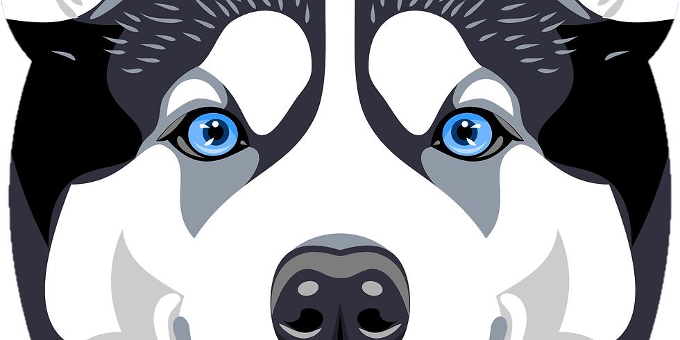 Husky Trot