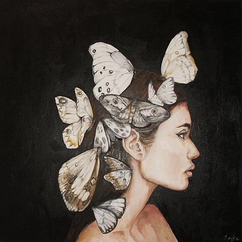 Noches de Mariposas