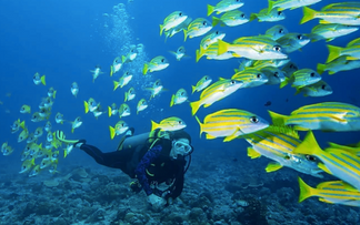 RESEARCH CONFIRMS THERAPEUTIC BENEFITS OF SCUBA DIVING