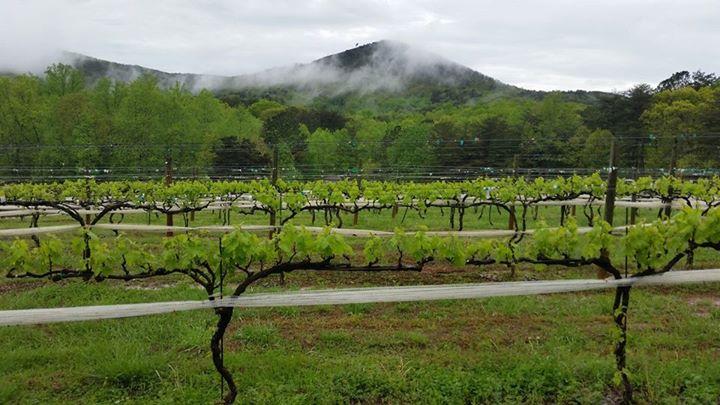 Nearby - Sharp Mountain Vineyards