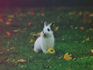 The Truth about the Easter Bunny: Revealed!