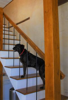 One of our dogs Louis carrying out his final inspection