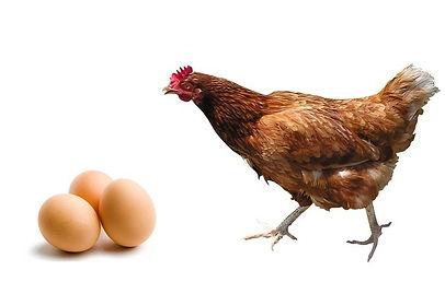 Você como os ovos ou a galinha? - Gestão Financeira Pessoal