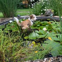 Aber der kleine Teich in meinem Garten kühlt auch schön 😁