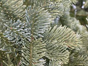 3 Wege um dein Weihnachtsfest nachhaltiger zu gestalten