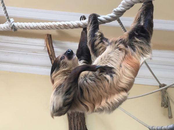 bequem, Faultier, Sloth Komfort & Kuschelfaktor